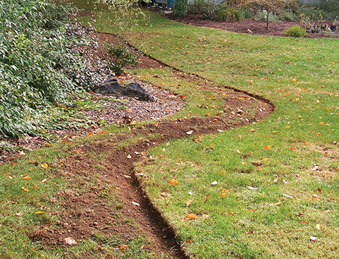 This existing shrub bed is being widened to make room for more plants. The edge has been cut and newspapers and mulch will be used to smother the lawn. Photo / Deborah Roberts